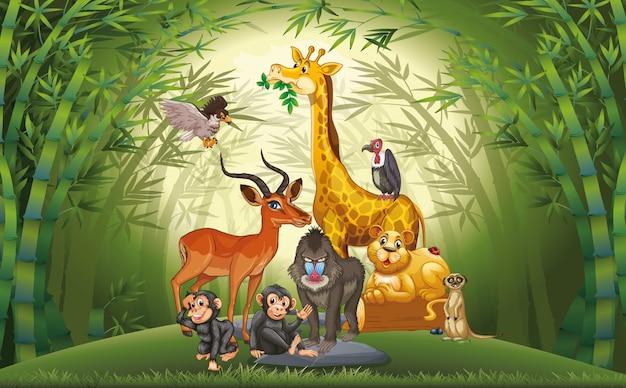 Много животных в бамбуковом лесу