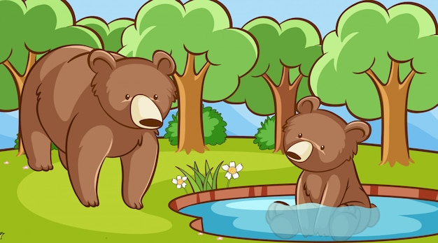 Сцена с медведями в лесу