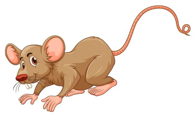 愚かな顔をした小さなマウス