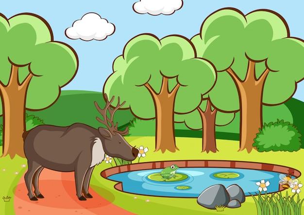 Сцена с оленем в лесу