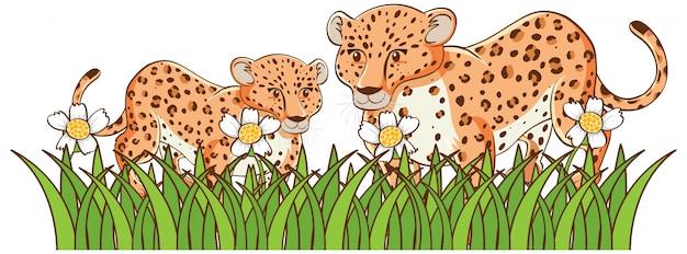 Изолированное изображение гепардов в саде