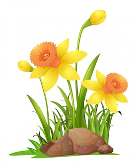 Нарцисс цветы в саду