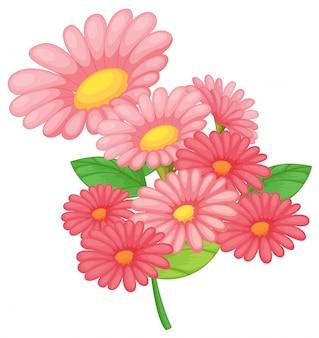 白地にピンクの花