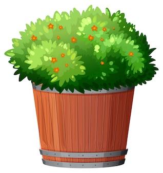 Горшечное растение с зелеными листьями на белом фоне