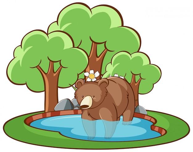 池で孤立したハイイログマ