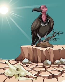 Стервятник стоит на пустынной земле