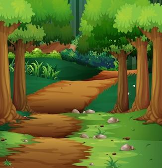 真ん中の未舗装の道路と森のシーン