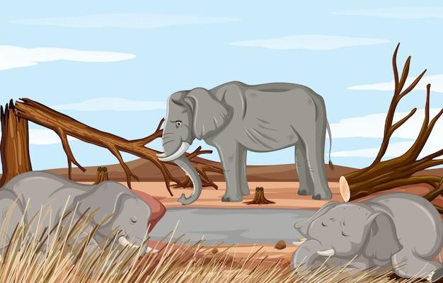 Сцена обезлесения с умирающим слоном