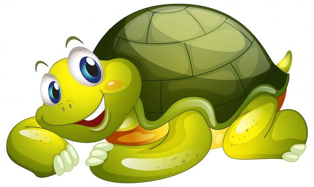Милая черепаха