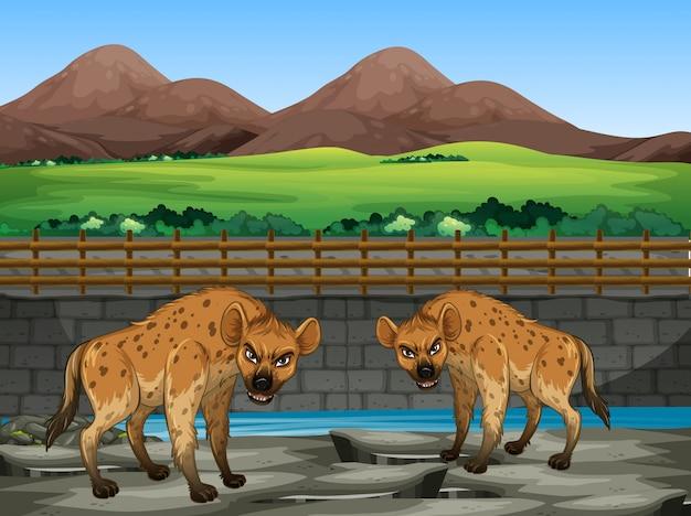 Сцена с гиеной в зоопарке