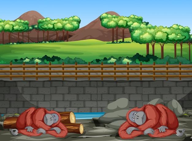 Сцена с двумя гориллами в зоопарке