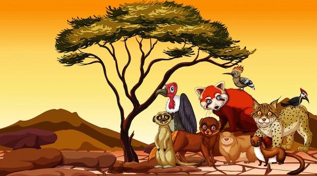 乾燥地に多くのアフリカの動物がいるシーン