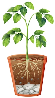分離の鍋に緑の植物