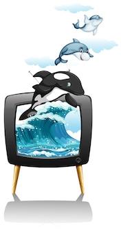 テレビで泳いだりジャンプしたりするイルカ