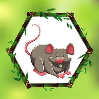 Серая крыса в бамбуковой рамке
