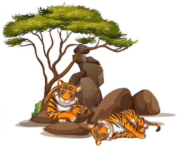Изолированное изображение двух тигров под деревьями