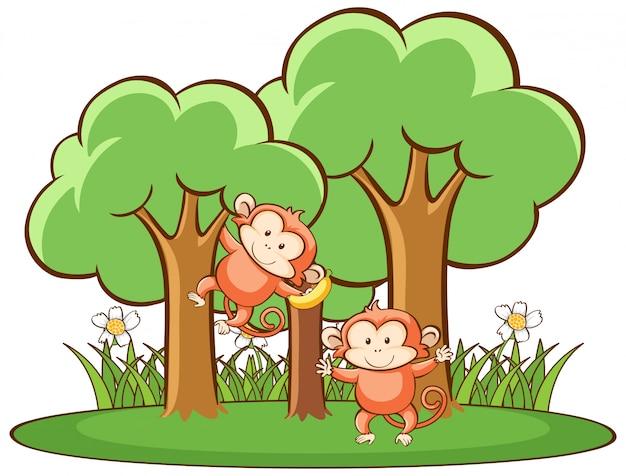 Сцена с обезьянами в лесу