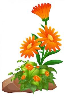 白地にオレンジ色の花
