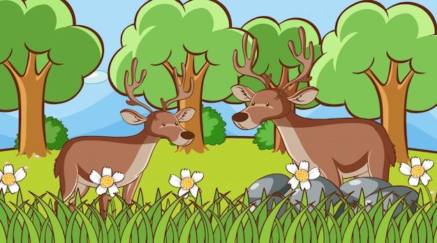 Сцена с двумя оленями в лесу