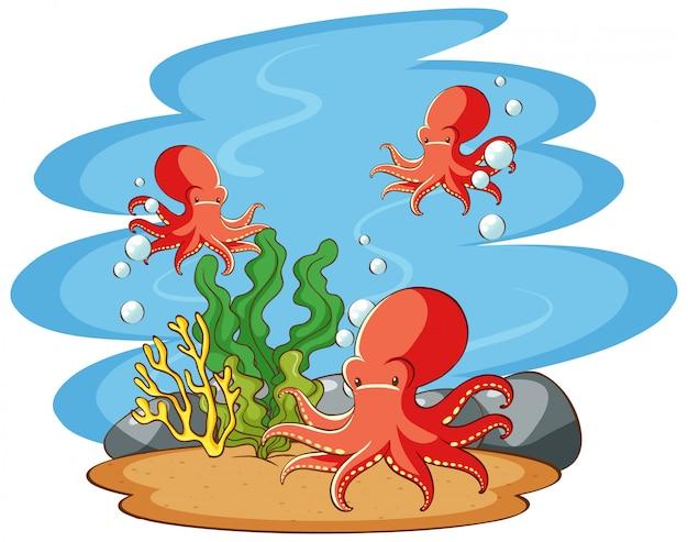 Осьминог купается в море