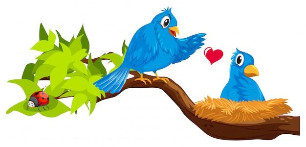 Две синие птицы в гнезде