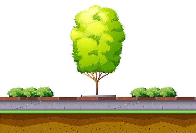 路上の木と茂み