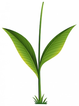 Зеленое растение