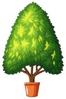 鍋に成長している木