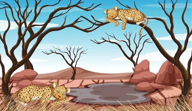 Загрязнение сцены с тиграми и засухой