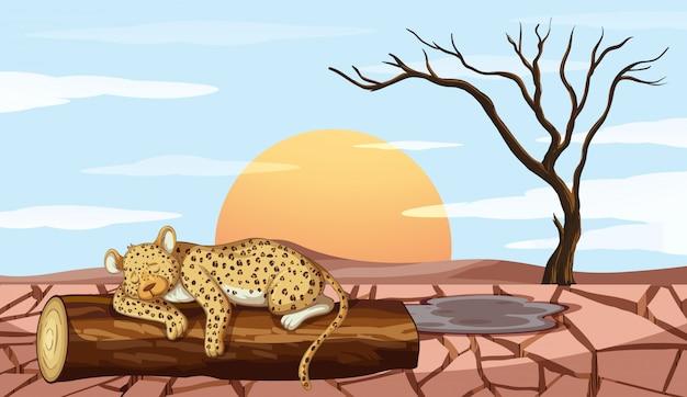Фоновая сцена с тигром и засухой