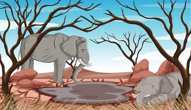干ばつの土地で死にかけている象