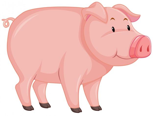 Милый поросенок с розовой кожей на белом