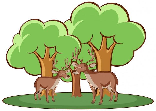 Изолированное изображение двух оленей