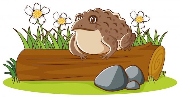 Изолированное изображение большой жабы на журнале