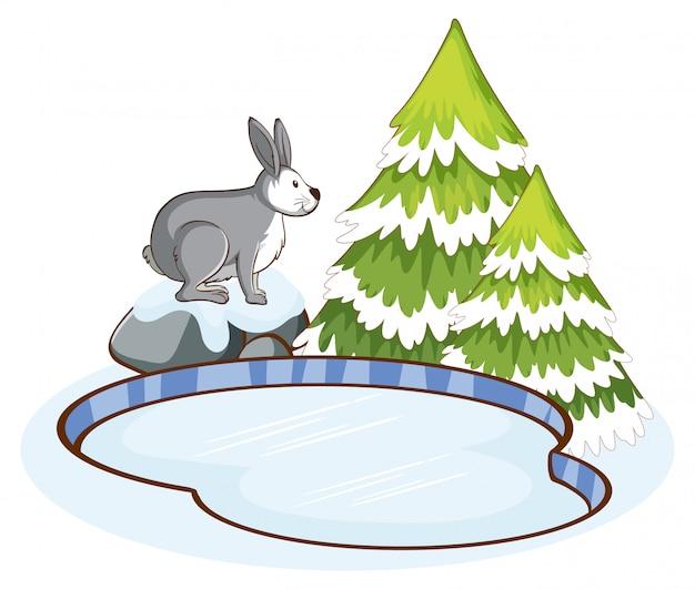 池のそばの灰色ウサギ