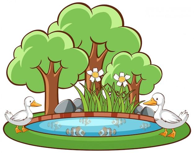 Утки в пруду на белом