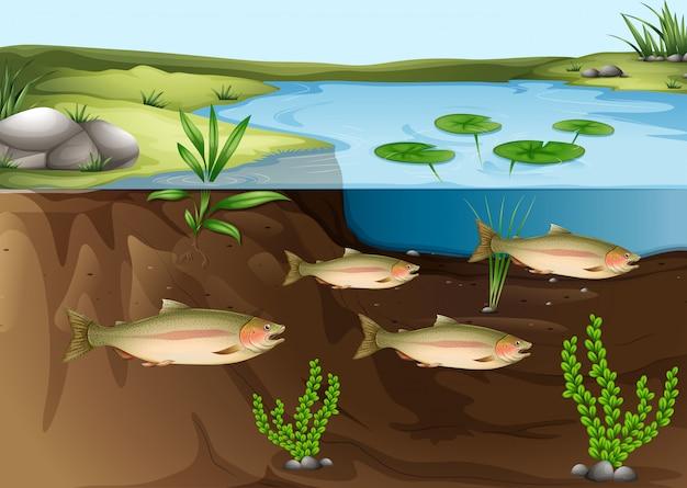 池の下の生態系