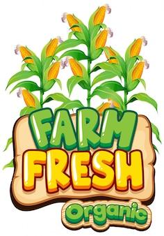 新鮮なトウモロコシと新鮮な農場の単語のフォントデザイン