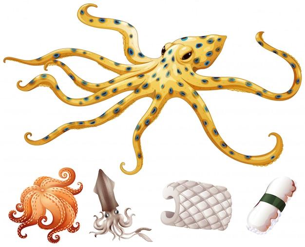 Морепродукты кальмар и осьминог