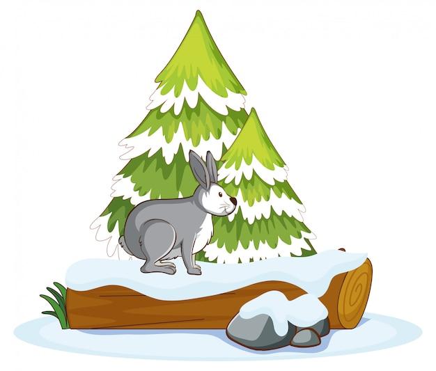 木の丸太のウサギ