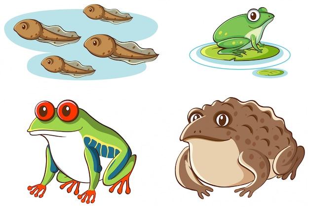 Изолированное изображение головастиков и лягушек