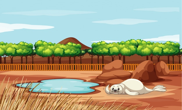 動物園でのアザラシのシーン
