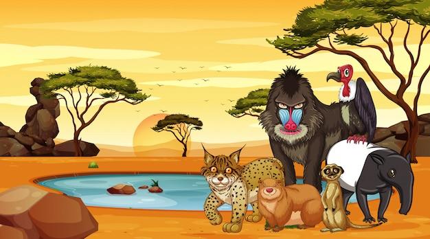 Сцена со многими животными в поле