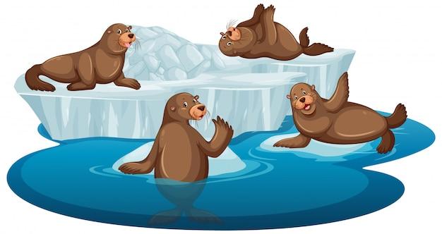 Картина коричневых тюленей