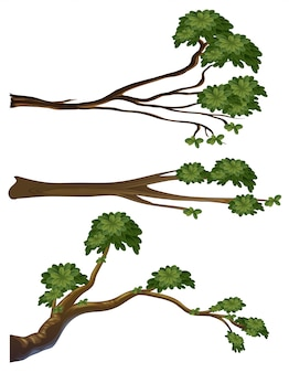 異なる形の枝