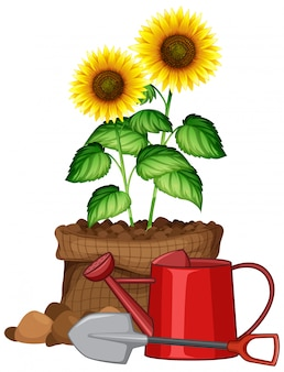 白い背景の上の茶色のバッグの美しい花