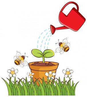 鍋に植物の孤立した画像