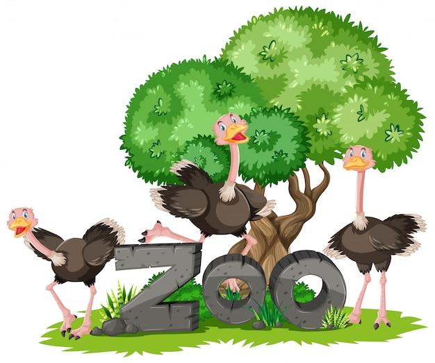 動物園のバナーとダチョウのグループ