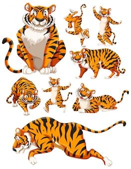 虎のキャラクターのセット