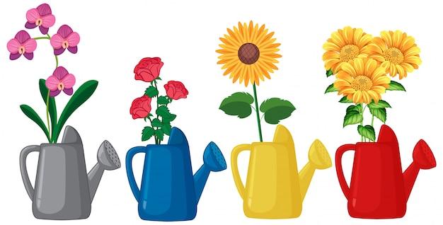 Набор цветов в лейке на белом фоне